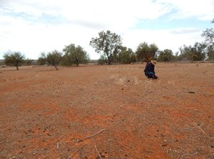 Excessive grazing of kangaroos could jeopardize land conservation, the study reveals