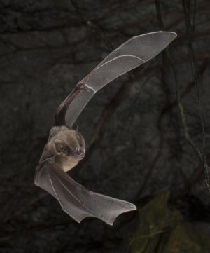 The stern core records 4,300 years of bat and environmental nutrition