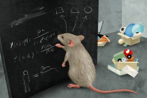 Mice master the complex thinking of the extraordinary ability of abstraction
