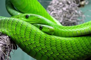 Species of snakes from different terrains reveal superficial secrets behind the slip of success