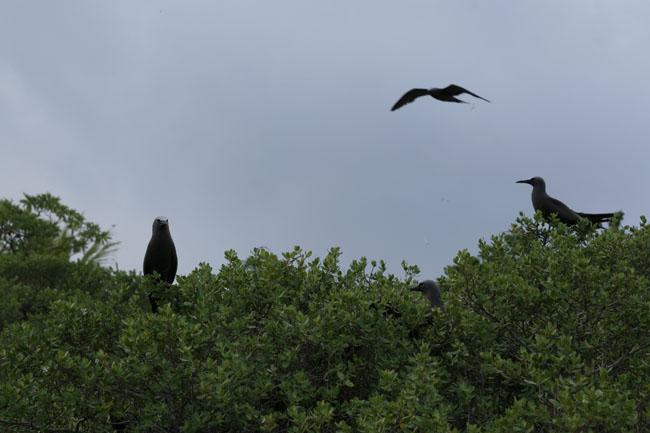 ile_oiseaux225.JPG