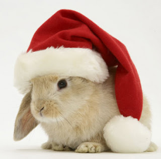 https://i0.wp.com/sd-5.archive-host.com/membres/images/164353825412355948/lapin-noel.jpg