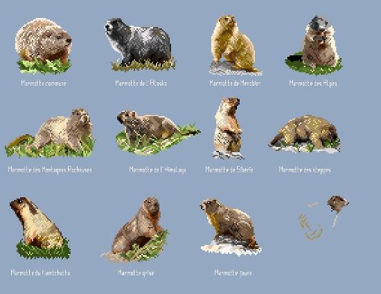 https://i0.wp.com/sd-5.archive-host.com/membres/images/164353825412355948/marmottes.jpg