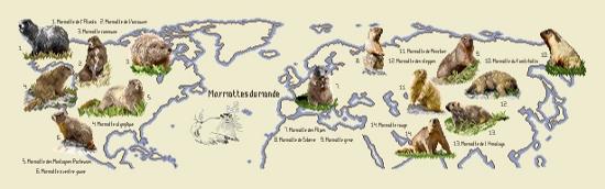 https://i0.wp.com/sd-5.archive-host.com/membres/images/164353825412355948/marmottes_termine_wordpress.jpg