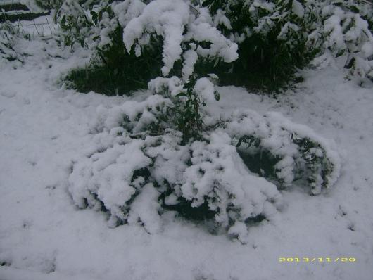https://i0.wp.com/sd-5.archive-host.com/membres/images/164353825412355948/neige_2013_8.JPG