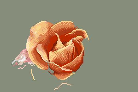https://i0.wp.com/sd-5.archive-host.com/membres/images/164353825412355948/portrait_rose_7_0711.JPG