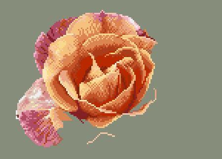 https://i0.wp.com/sd-5.archive-host.com/membres/images/164353825412355948/portrait_rose_9_0711.JPG