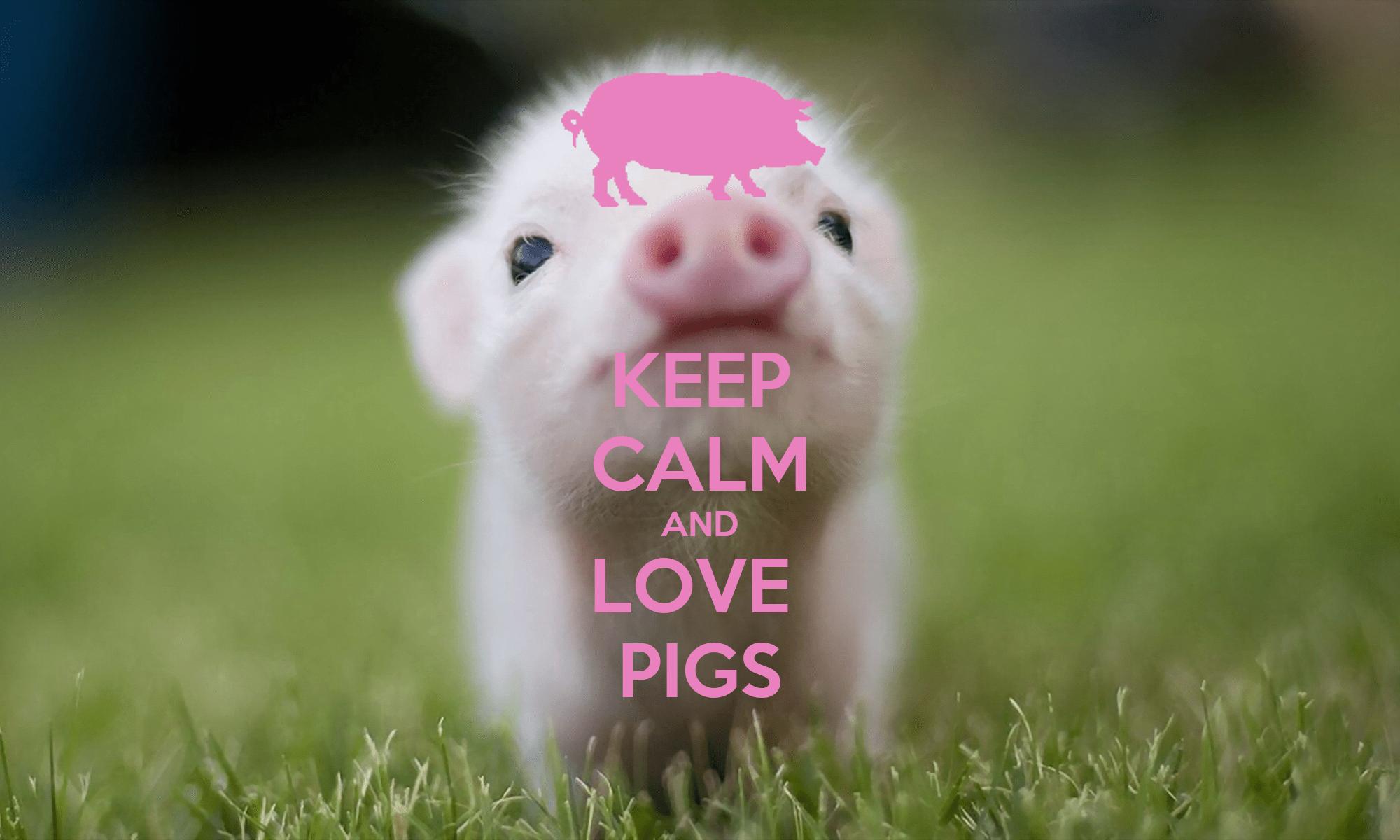 Cute Piglets Wallpaper Keep Calm And Love Pigs Poster Josh Keep Calm O Matic