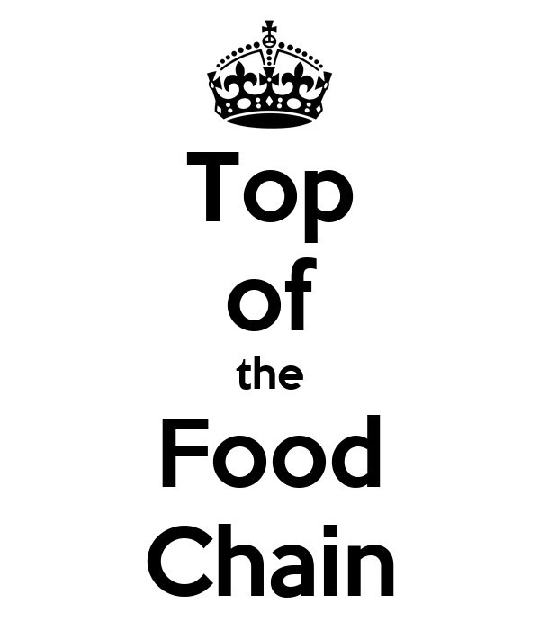 Top of the food chain essay