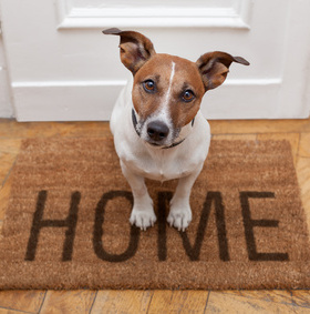 Five At-home Care Tips For Your Pet