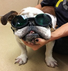 Butch in Doggles