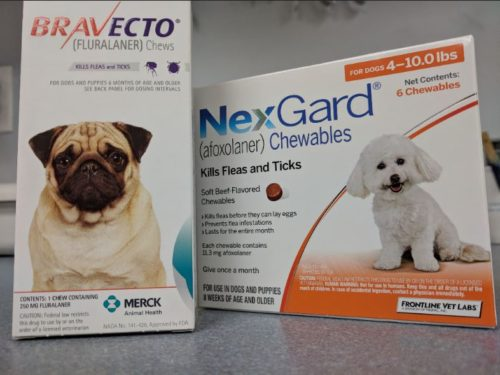 Is Nexgard going to kill my dog?!? (Spoiler alert – no)