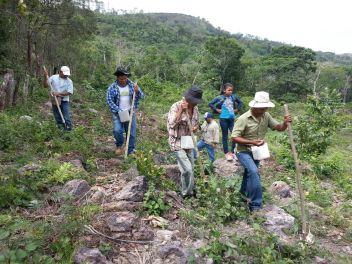 6 Programa de Reforestación- 04-09-2017