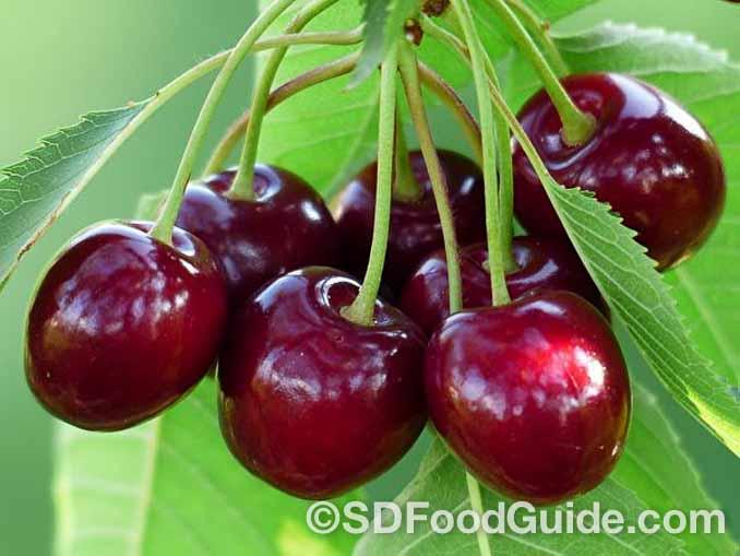 樱桃中含有丰富的维生素A,可以有效的滋润皮肤,对皮肤起到美容的作用