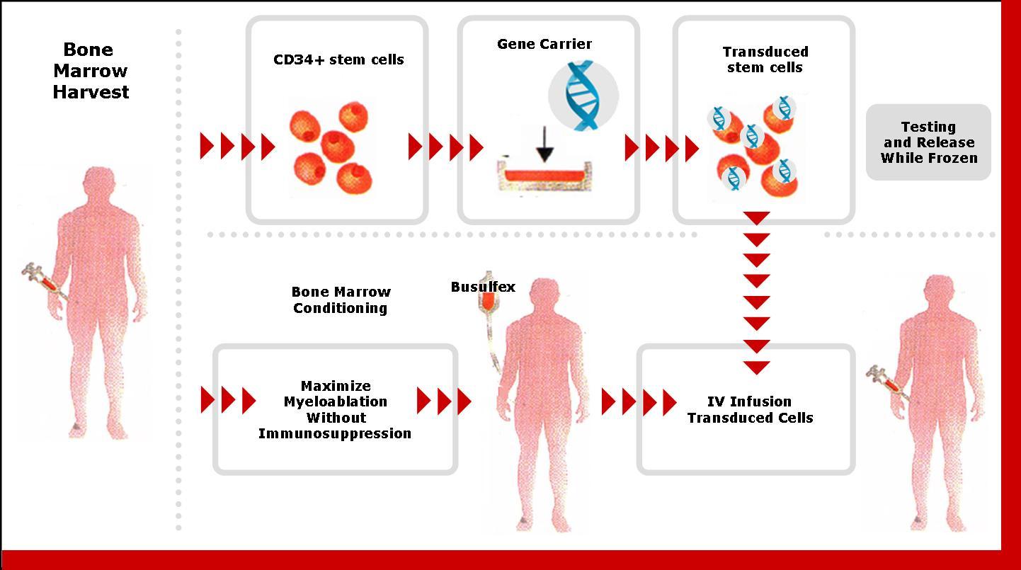 in vivo gene therapy diagram speaker wiring for 2004 chevy silverado clinical trial boston biotech watch