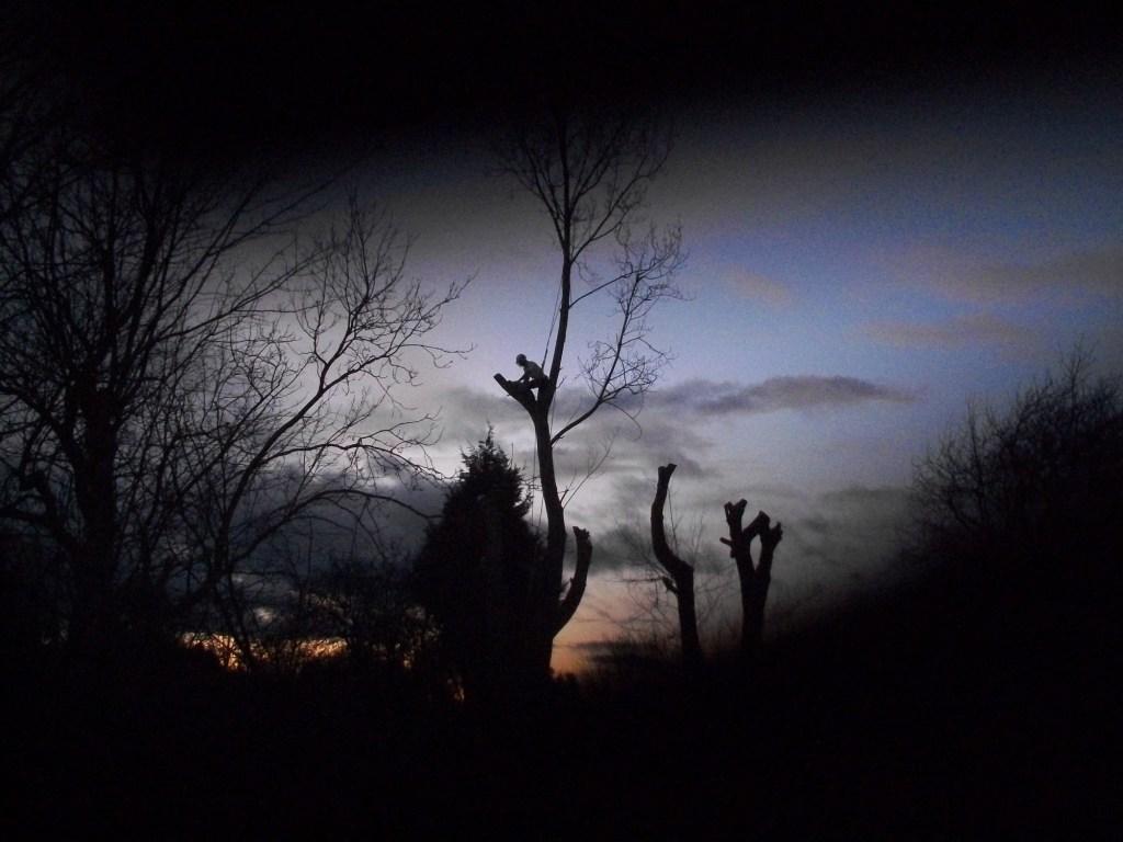 Tree dismantling dusk Leeds