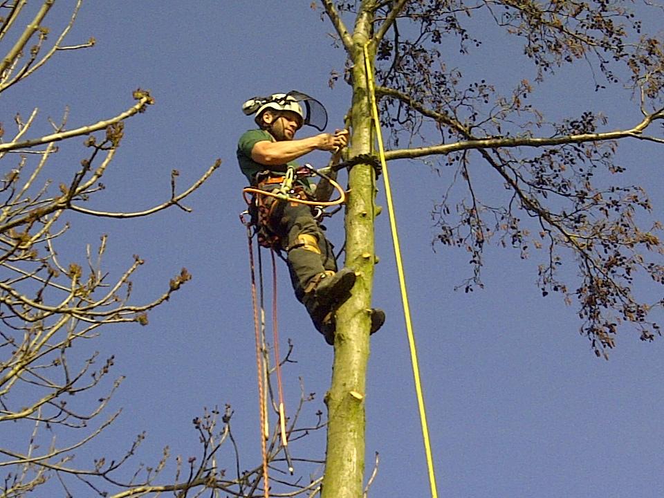 rigging out alder