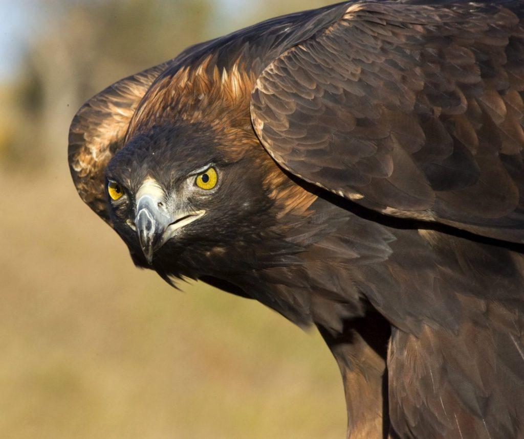 3rd place, Wildlife Captive category: Dawn Douglas