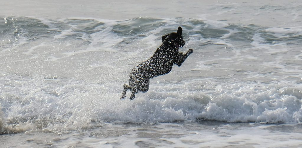 Dave Miller - Del Mar Dog