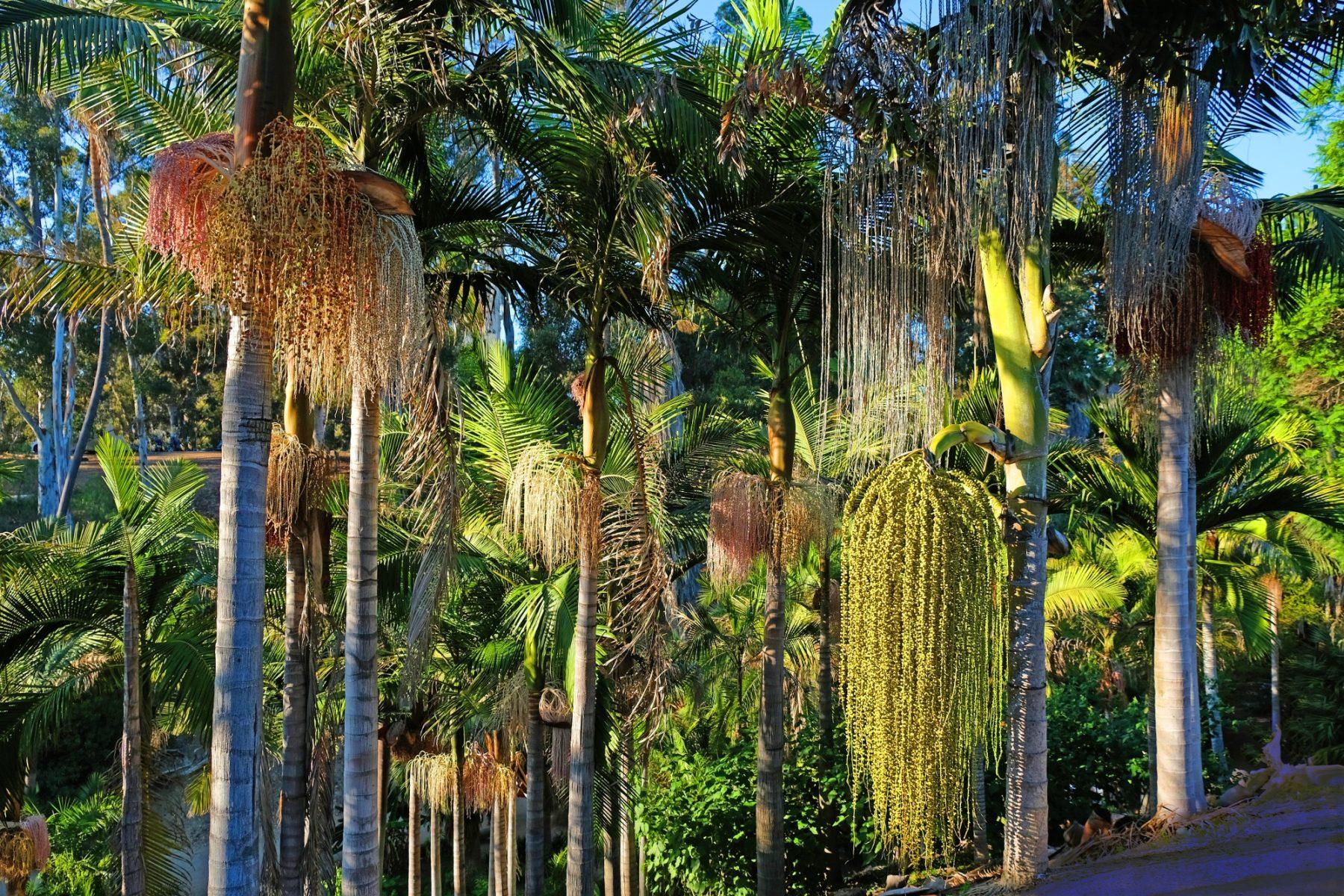 Dave Miller - Balboa Park Trees