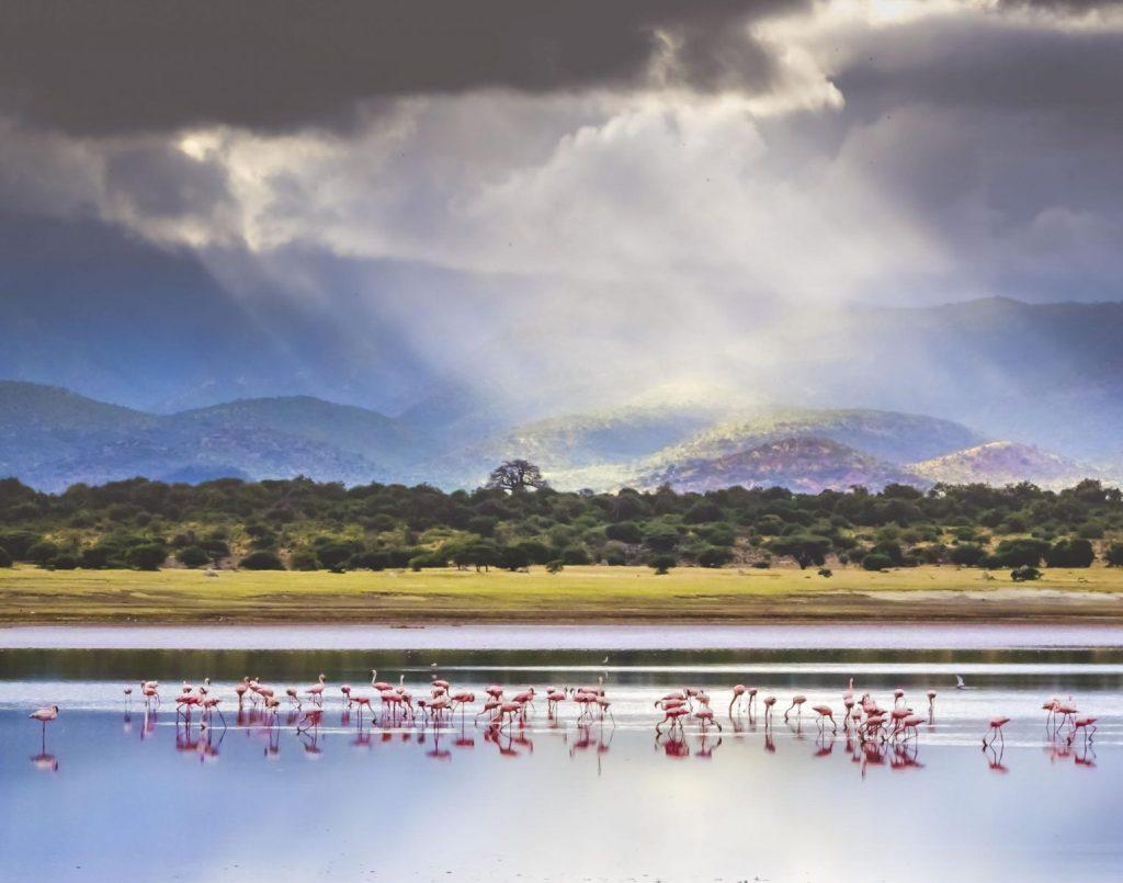 Hon - Dana Smith - Flamingos