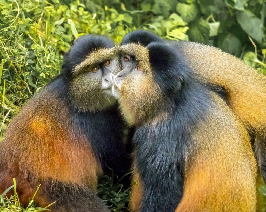 Hon - Dana Smith - Primates