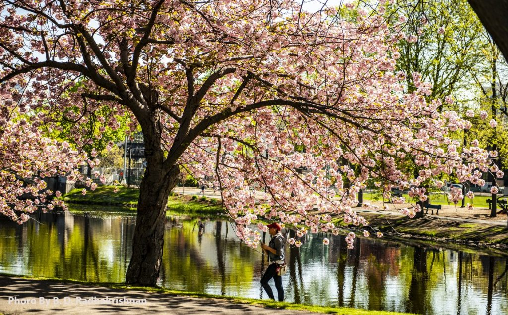 Ben Radhakrishnan - Boston Common Spring