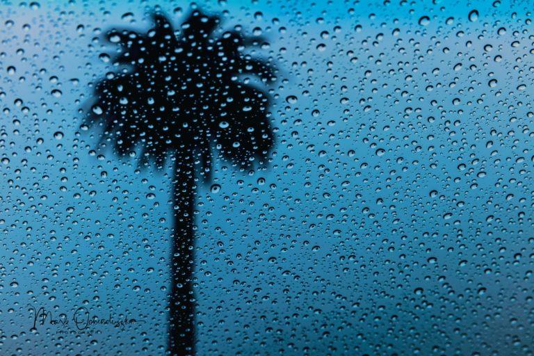 Mark Ochenduszko - Palm Tree Raindrops