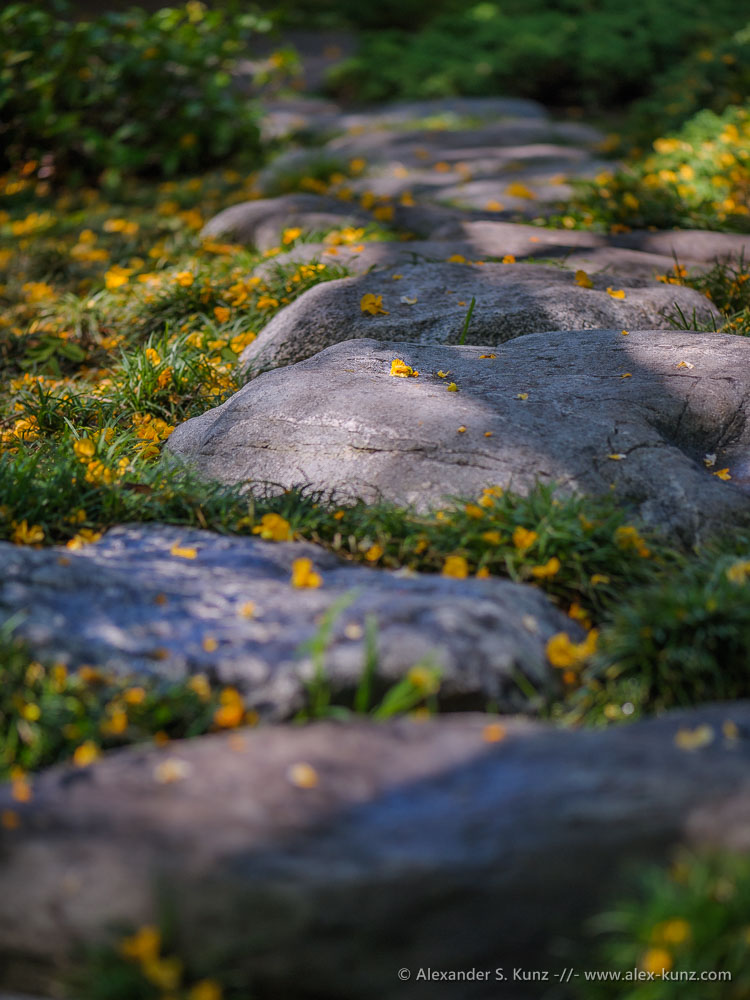 Stepping stones and yellow blossoms in the Japanese Friendship Garden