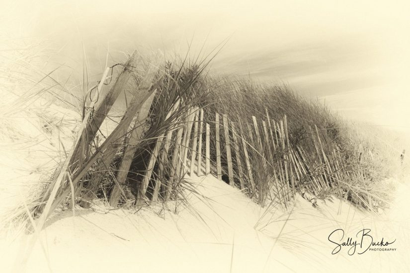Sally Bucko - Sandy Neck Beach West Barnstable MA