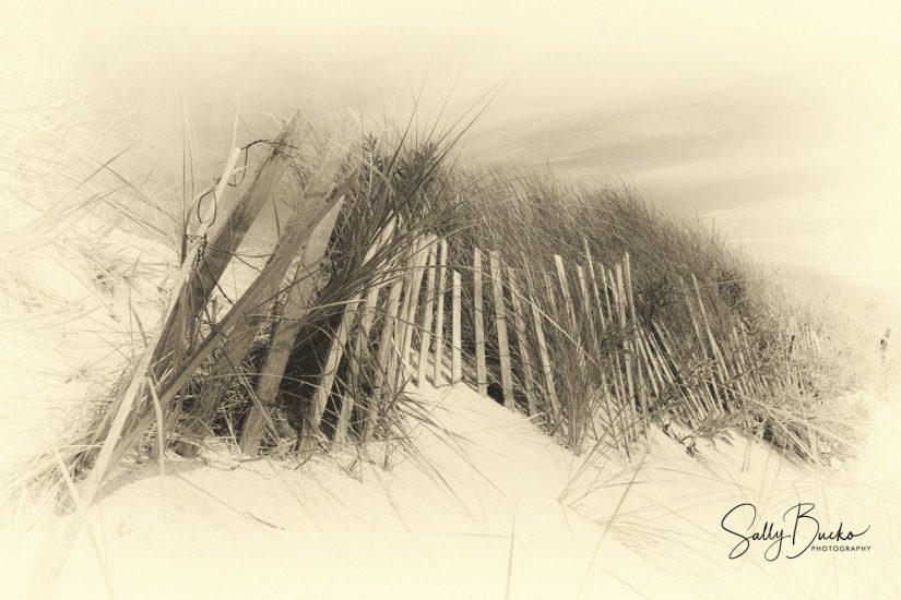 Sally Bucko - Sandy Neck Beach West Barnstable MA