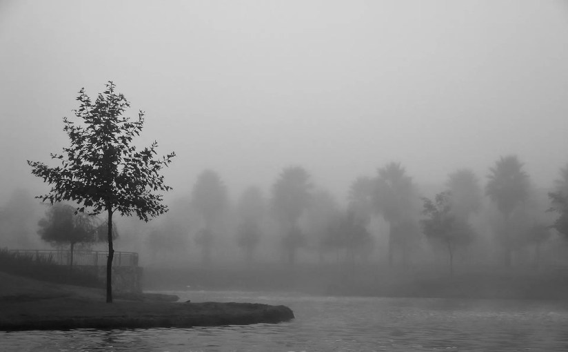 Joseph Smith - Tree in Fog, Chula Vista, 2003