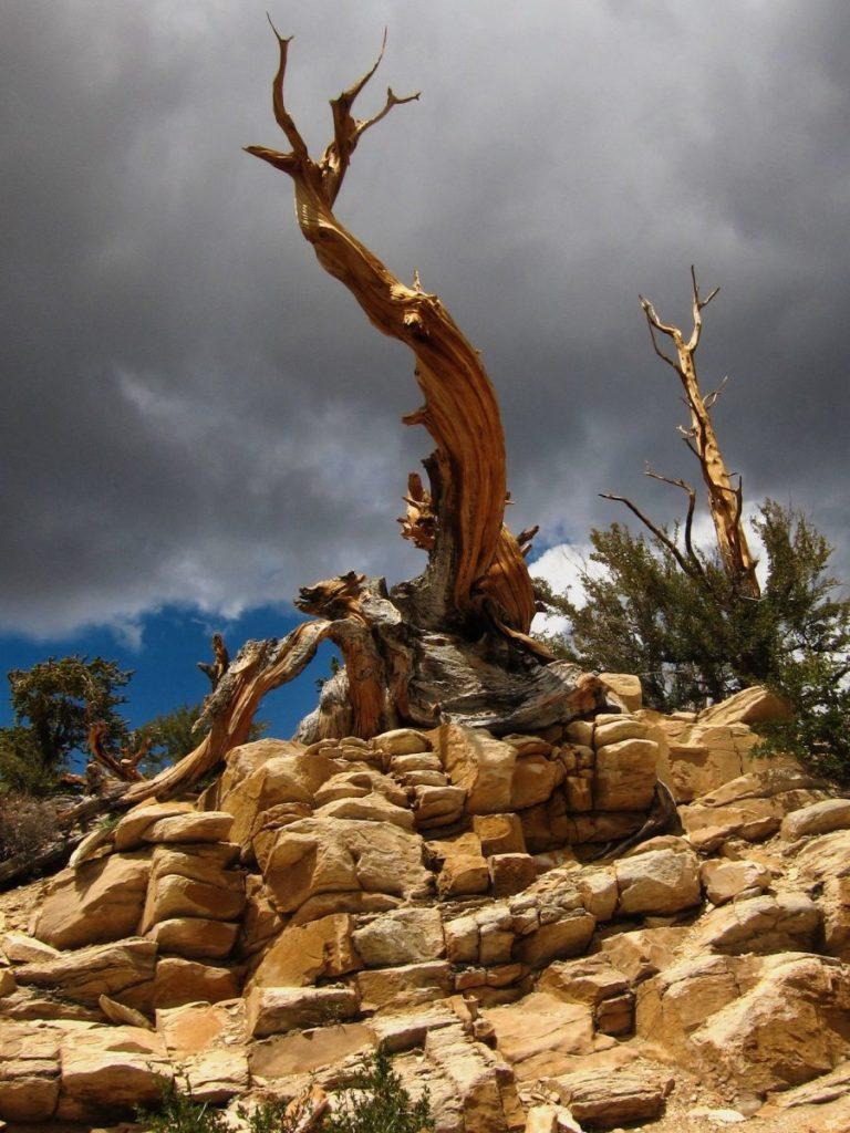 Roy Cano - Tree, 2011
