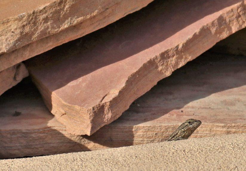 Barbara Whitman - Visitor on the Rocks