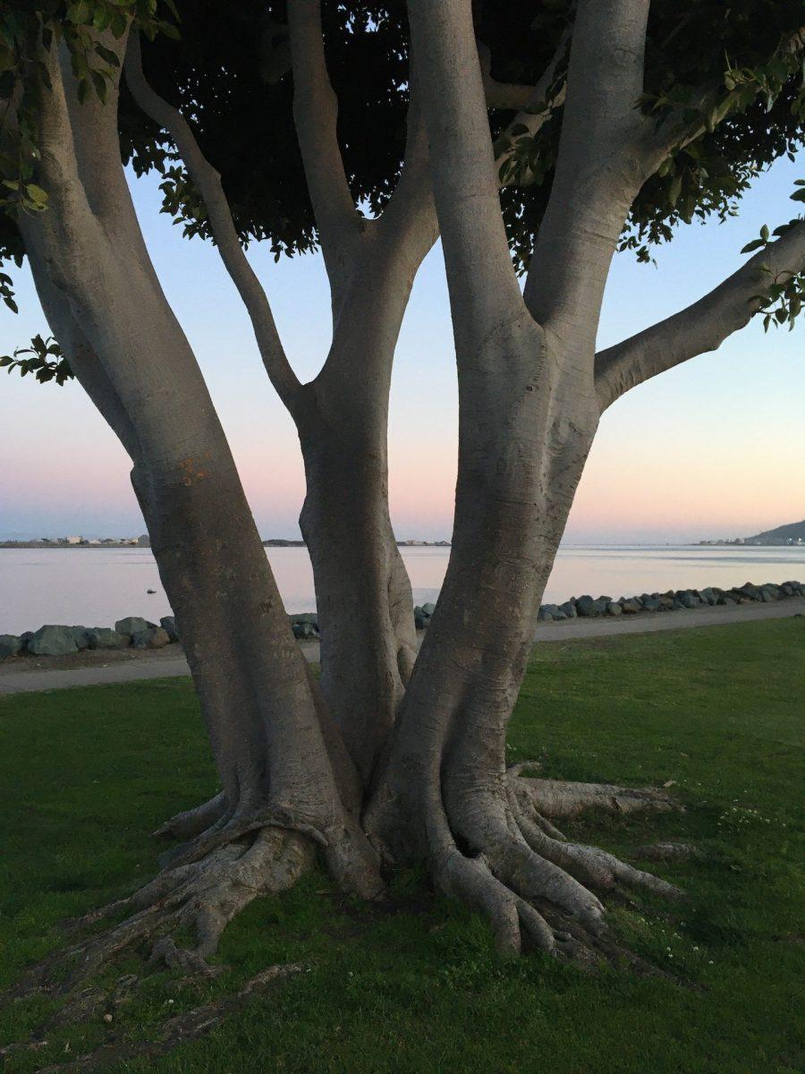 Erica Miller - Sunset Tree