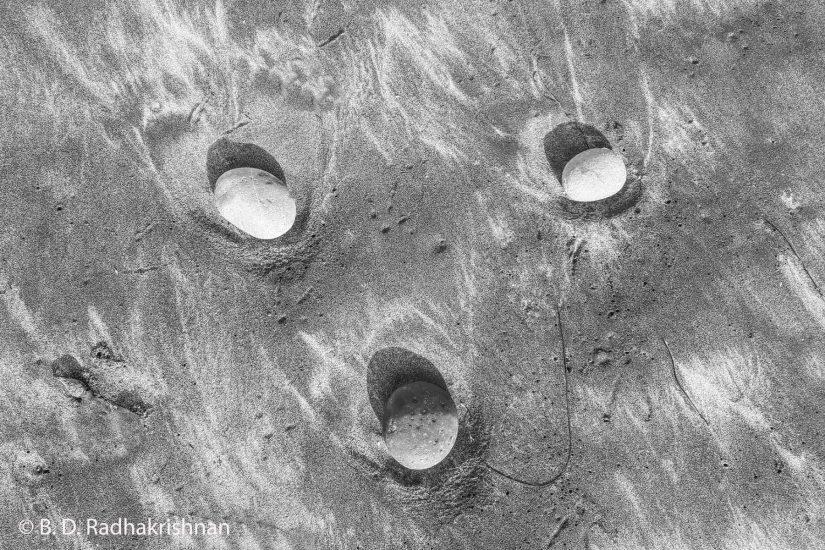 Ben Radhakrishnan - Nature's Surf N Turf Face Creation on Beach Sand