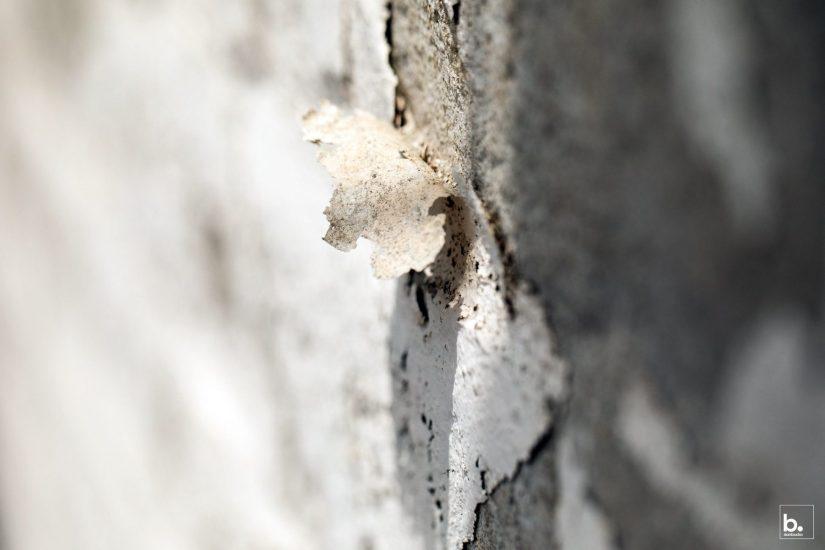 Dan Bucko - A-Peeling-Texture