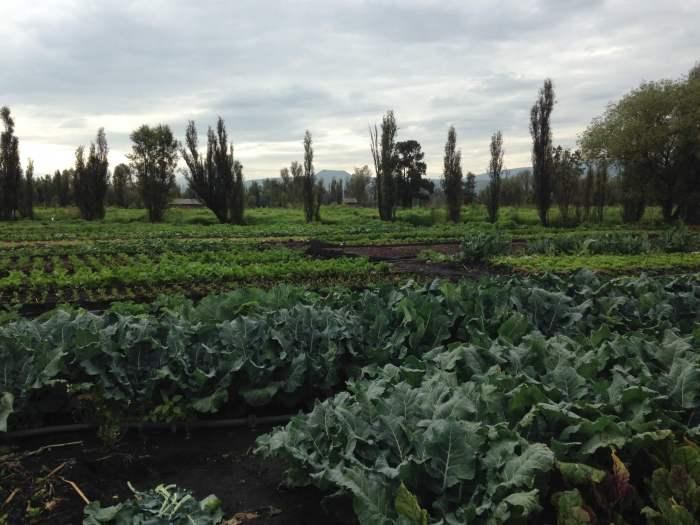 Cultivos de chinampa. La chinampa-refugio para la conservación del axolote en un Xochimilco sostenible