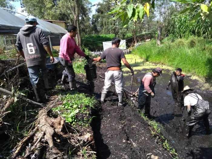 Habitantes de xochimilco. La chinampa-refugio para la conservación del axolote en un Xochimilco sostenible