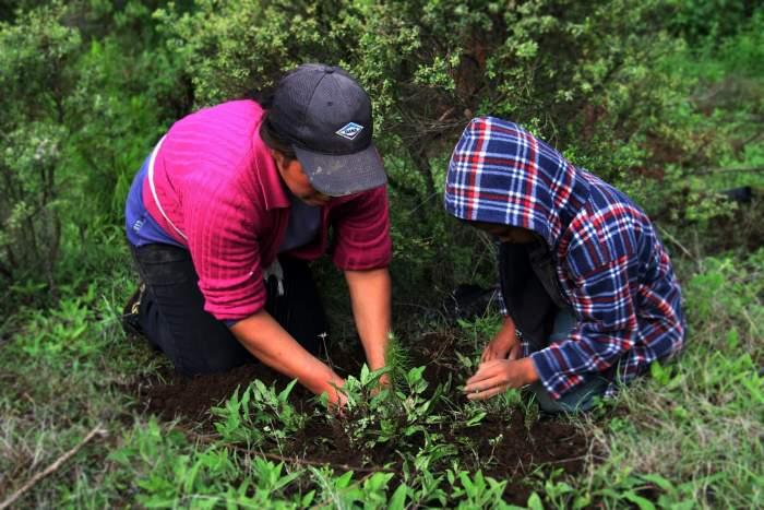Familias en reforestación