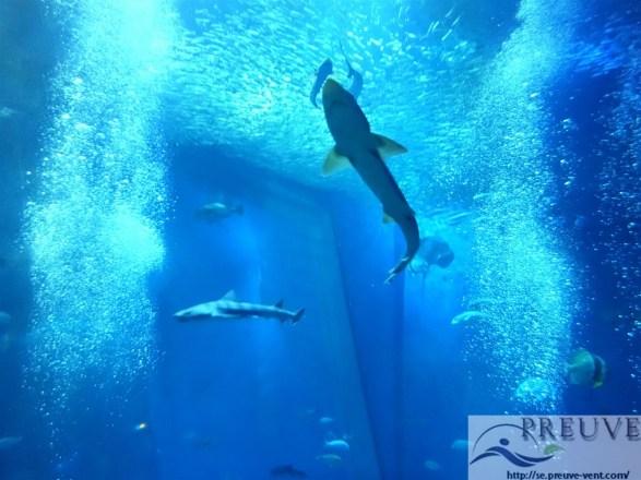 大洗水族館のサメ