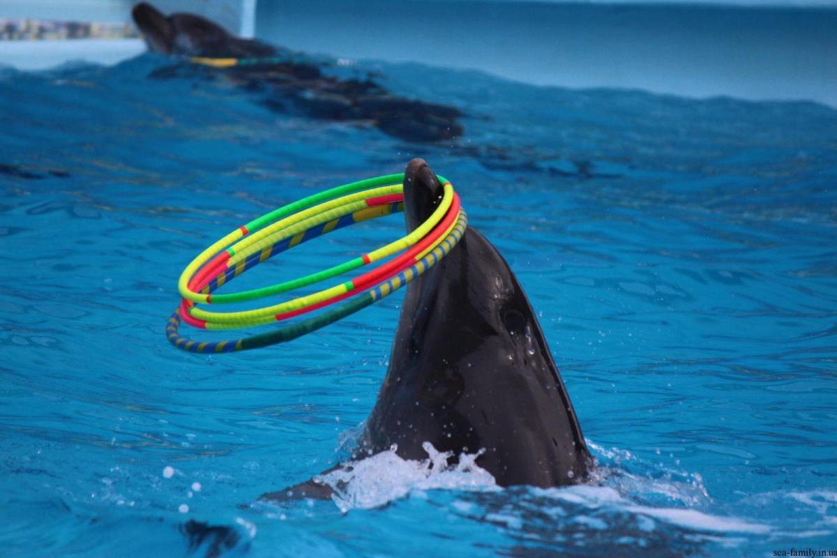 дельфинарий оскар геническ