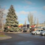 В Геническе приступили к украшению новогодней елки. Фоторепортаж