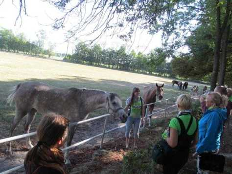 09. Арабские кони привыкли к туристам