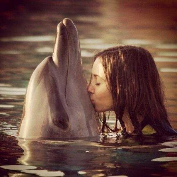 «Люди моря» и «дельфины суши»