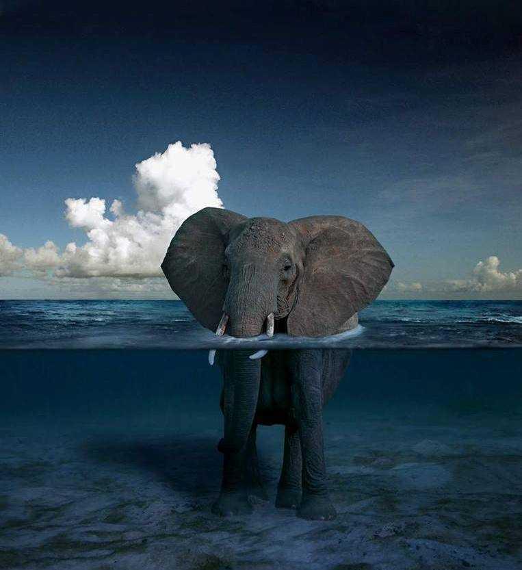 Слоны Геническа: гости из ледникового периода