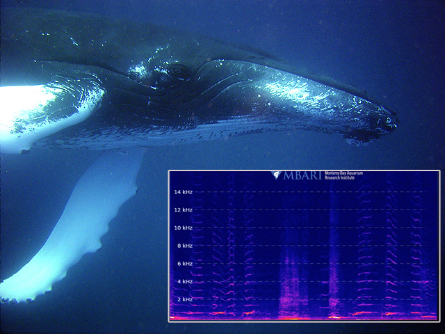Hydrophone in Monterey Bay Provides Live Stream of Ocean Sounds