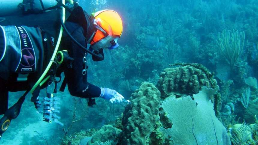 WHOI microbes coral study Cuba