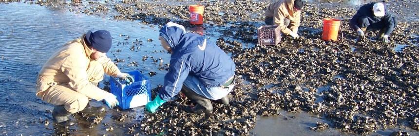 mussel monitoring crew