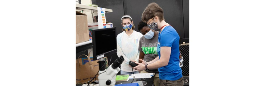 NAVSEA mammal research